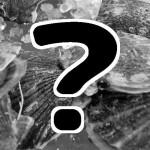 バタ貝?ヒオウギ貝?三重のカラフルな虹色貝!『発見!なるほどレストラン』4/21の餃子