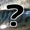 バッテラ@大阪?鯖寿司との違い&通販お取り寄せ『ケンミンショー』5/14