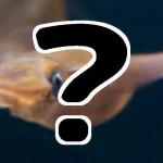 ホタルイカ@富山の食べ方レシピ&通販お取り寄せ『ケンミンショー』6/4