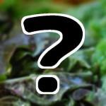 ケール(冷凍青汁&サラダ)お取り寄せ通販 バイキング12/17&満点青空レストラン@静岡磐田マスダ