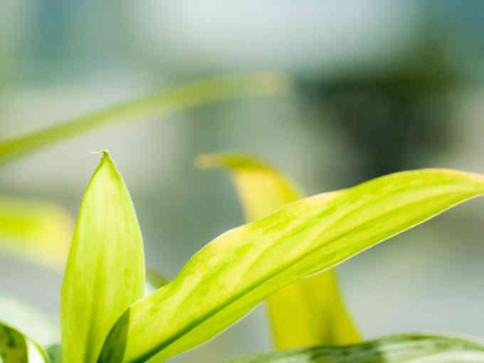 マツコの知らない世界_観葉植物_テレビで話題
