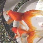 金魚アートの通販 深堀隆介氏がヒルナンデス8/17に 3D樹脂金魚