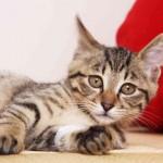 マツコの知らない世界 猫写真家・石原さくらがラグドール・ベンガル・マツコ猫?を紹介 その写真集の通販は?